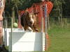 troy-flyball-10
