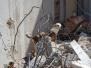 SAR Dogs/Rettungshundearbeit/záchranných psû