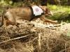 Rettungshund Cataloochee´s Ginger