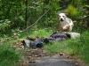 Rettungshund Indigo Louis Sumici kridla