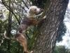 indigo-louis_treeing
