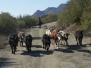 Working on cattle/Treibarbeit/pracuje na dobytek